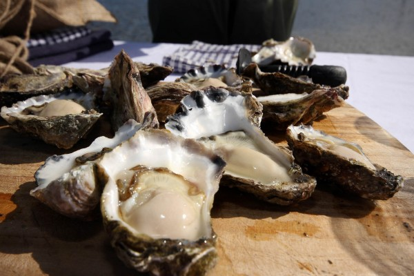 gang gang tours eco australia oysters seafood