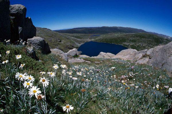 gang gang tours eco australia snowy mountains kosciuszko national park
