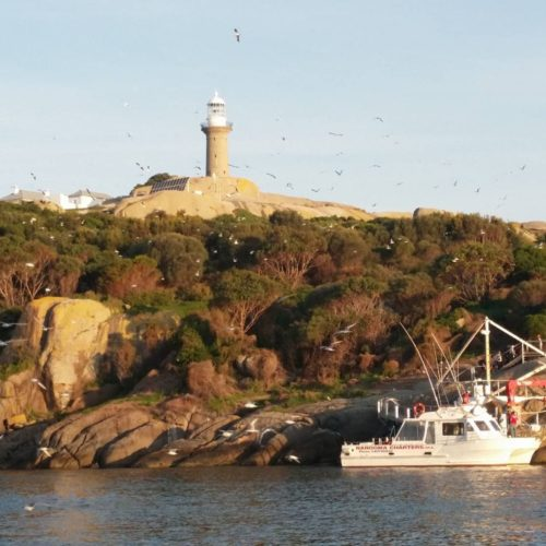 Cruise boat moored in front of Montague Island lighthouse with seagulls