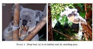 vicious looking drop bear with fangs on left and drop bear flying through the air on the right