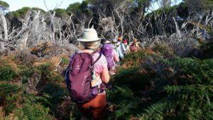 six women hiking single file through a dense tea tree grove
