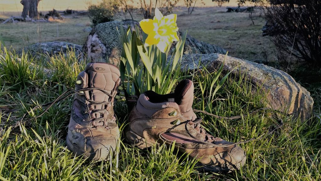 pair of old hiking boots on grass with daffodil behind
