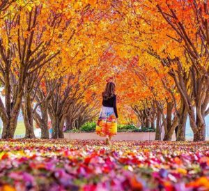 young girl walking on path covered with autumn leaves beneath trees with golden leaves