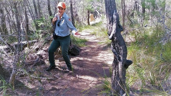 female park ranger on track pointing at a goanna climbing a tree