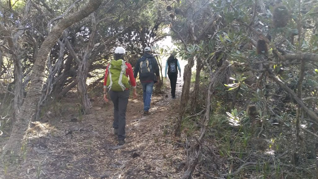 three people hiking through tea tree and banksia