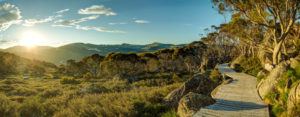 sunset on snowgums boardwalk at charlotte pass