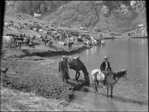 two men with horses and herd of cattle drinking and grazing by lake with mountains in background