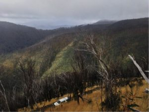 high country gully with both burned snowgums forest and burned ash forest