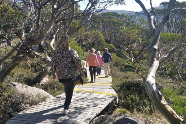 four people walking on wooden boardwalk amongst gum trees