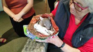 senior lady holding baby wombat