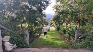 two women walking down a grass path between gardens of trees and shrubs with white flowers