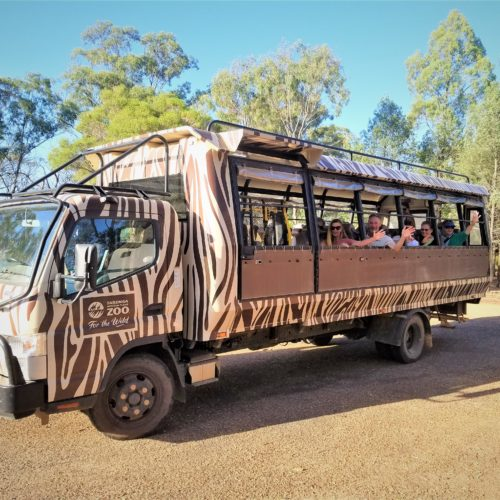 people sitting on an open window safari truck with zebra stripes