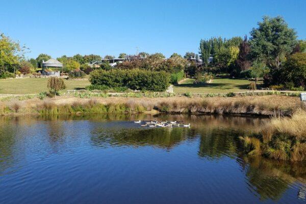 ducks on pond with garden behind
